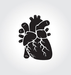 Heart anatomy symbol vector