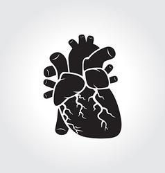 Heart anatomy symbol vector image