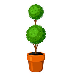 boxwood topiary garden plant decorative tree in vector image