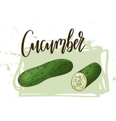 Vegetable element of cucumber hand drawn vector