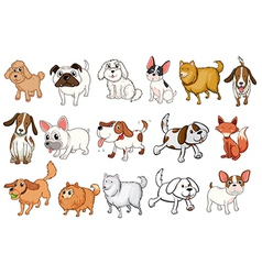 Different breeds of dogs vector image