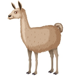Llama with happy face vector