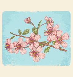 Postcard with sakura vector