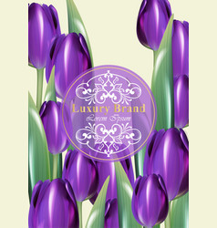 tulip flowers card frame decor with wooden vector image
