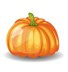 Glossy orange pumpkin vector