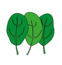 Cartoon of green fresh spinach vegetarian food vector
