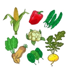 Herbs and vegetables vector