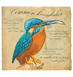 Common kingfisher - an hand painted vector
