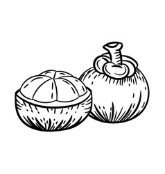 Line drawing of mangosteen -simple line vector