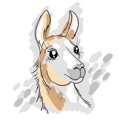Hand drawn of lama vector image
