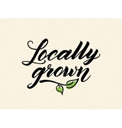 Locally grown hand drawn brush lettering vector