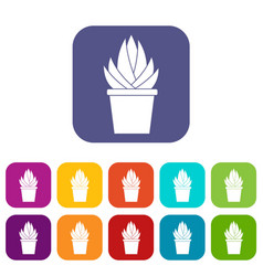 Aloe vera plant icons set flat vector