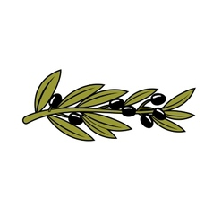 Leafy branch with ripe black olives vector
