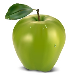 fresh green apple with leaf vector image vector image