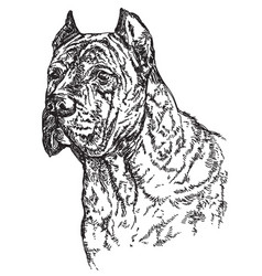 Dog head in profil hand drawing vector