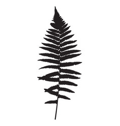 fern leaf silhouette background vector image