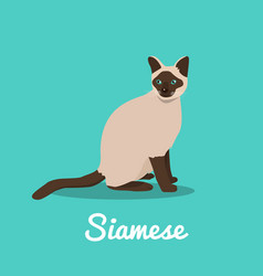 Siamese cat on sky blue background vector