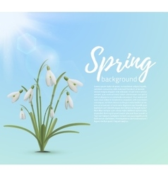 Spring background template vector