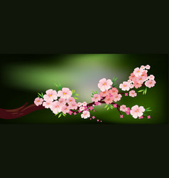 Cherry blossom on the branch vector