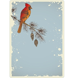 Pine branch and cardinal bird vector