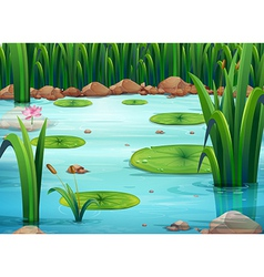 A pond with green plants vector