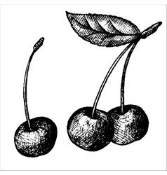 hand drawn cherries vector image