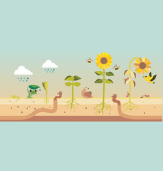 From seed to seed plant growth proccess vector