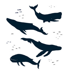 marine mammals silhouette vector image vector image