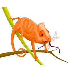 Orange cartoon chameleon vector