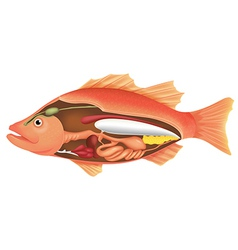 Anatomy of a fish vector