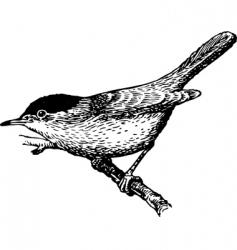 bird Sylvia vector image