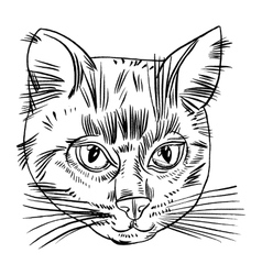 Cat head vector
