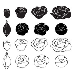 black rose and white rose vector image vector image