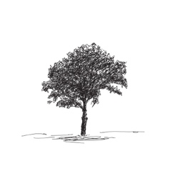 Sketch of isolated tree vector image vector image