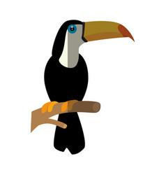 wild tucan cartoon vector image