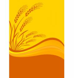 cereal crop vector image
