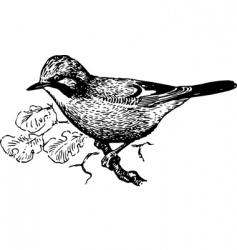 bird garrulus glandarius vector image vector image