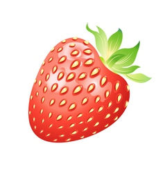 beautiful strawberry vector image vector image