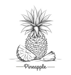 Doodle sweets pineapple vector