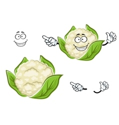 Ripe cartoon cauliflower vegetable with leaves vector image vector image
