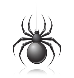 Black spider emblem vector