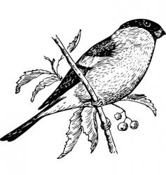 bird pyrrhula vector image