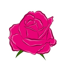 Pink rose isolated vector