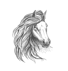 Horse head sketch with wavy mane vector