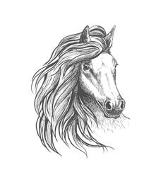 Horse head sketch with wavy mane vector