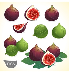 Set of dark and green fig in various style vector