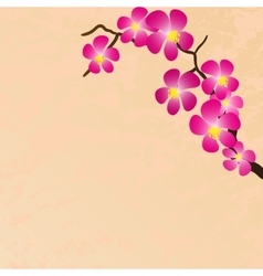 Background with beautiful sacura spring cherry vector image