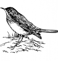 bird luscinia vector image vector image