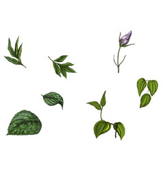 Set with flower bud leaves and stem isolated on vector