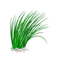 Bush of tall green grass vector